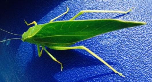 leaf_bug_justacraftykat (2)