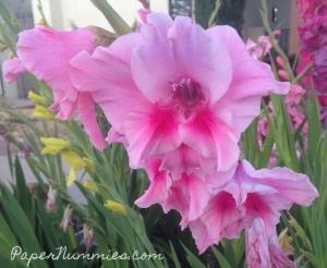 papernummies_iris_pink