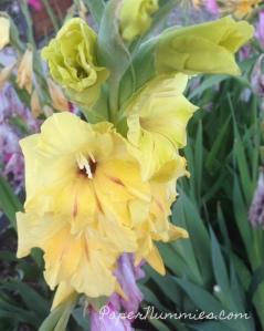 yellow iris papernummies